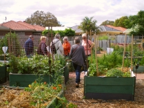 cCommunity garden open day 16 Nov '14 016